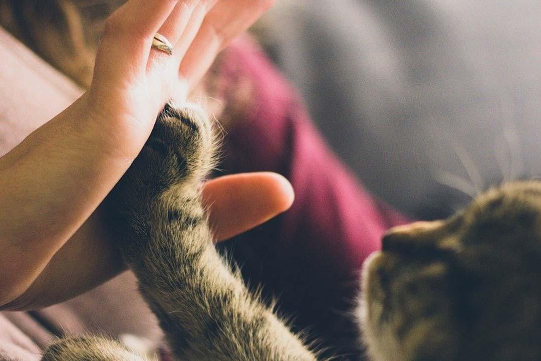 high-five.jpg